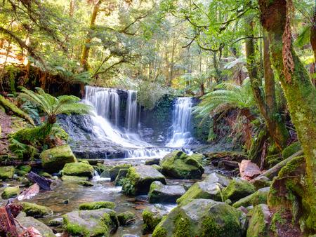 러셀 폭포 태즈 메이 니아의 마운트 필드 국립 공원 호주는 백열 벌레로 유명합니다. 스톡 콘텐츠