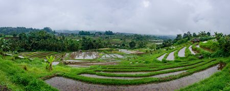 The Jatiluwih Rice terraces are recognised as an exemplar of water management