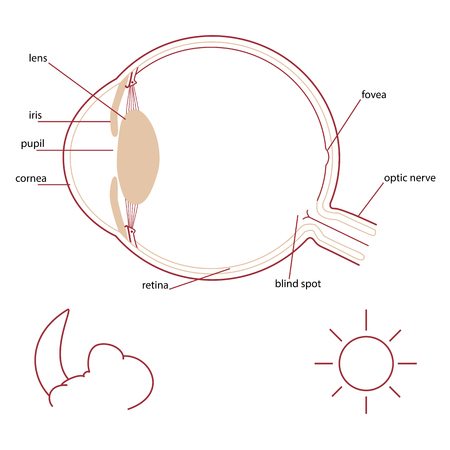 Eye parts background