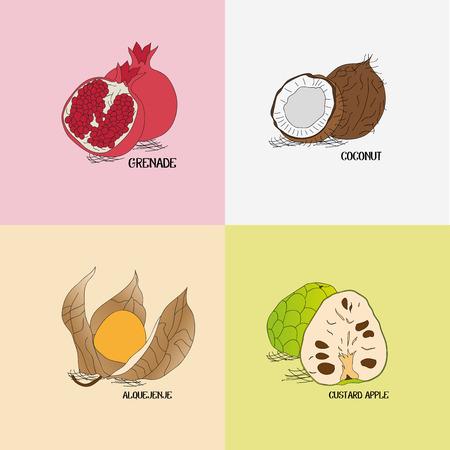 健全なビジネス掲示板の 4 つの異なるトロピカル フルーツ  イラスト・ベクター素材