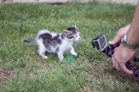 recorded: a horizontal view of a cat being recorded with a videocamera