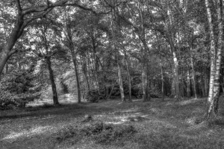 b w: a horizontal black and white view of a forest with a path