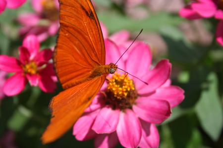 A single orange butterfly on a flower