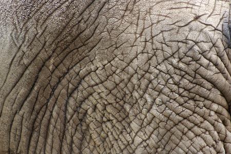 Detailed texture of an elephants skin Reklamní fotografie