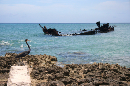 ship wreck: A large bird on a rocky shore and a shipwreck in the background