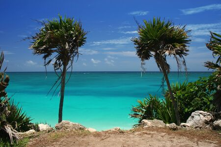 Looking between two palm trees on a cliff overlooking the Caribbean Sea Stock Photo