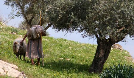 pastor de ovejas: Nazaret Pastor  Foto de archivo