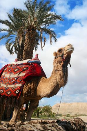 Camel en Palm Tree Stockfoto