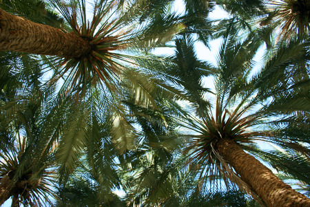 Palm Tree Canopy