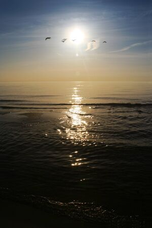 Birds in the sunset photo