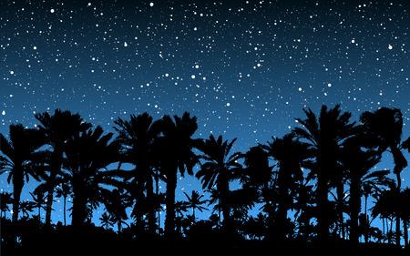 Palm bomen onder de sterren