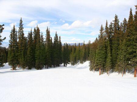 평화로운 눈 덮인 숲 스톡 콘텐츠