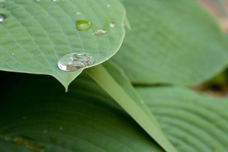 Dew on Leaf 4