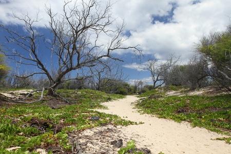 Hawaiian Landscape Reklamní fotografie