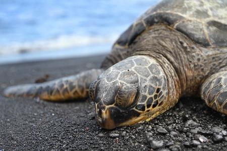 Sea Turtle Close Up