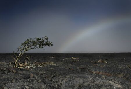 Tree Mimics Rainbow Stock Photo