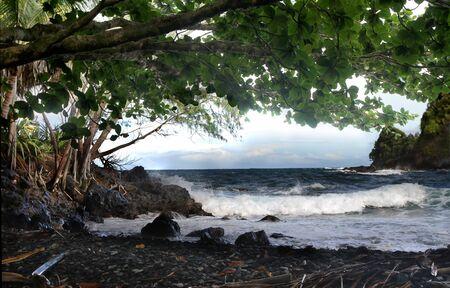 shady: Shady Hawaiian Beach