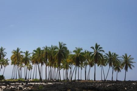 Palm Tree Forest Reklamní fotografie