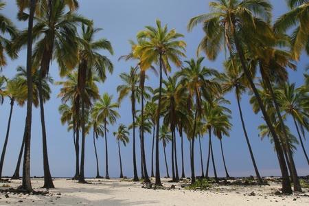 Palm Tree Oasis 1