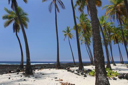 Palm Tree Oasis 2