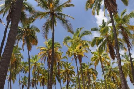 Palm Tree Oasis 4 Reklamní fotografie