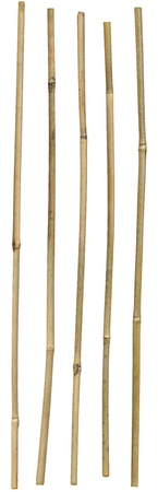Five dried ornamental bamboo sticks isolated over white. Very high-res. Clean edges, no shadows.
