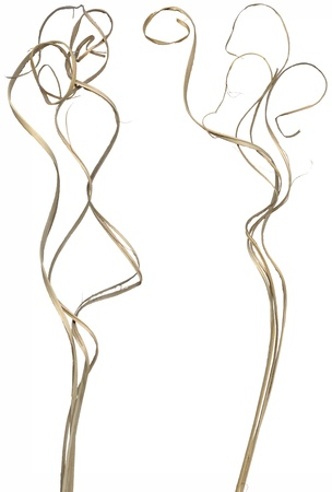 Two separated bundles of ornamental curly sticks isolated over white. Very high-res. Clean edges, no shadows.