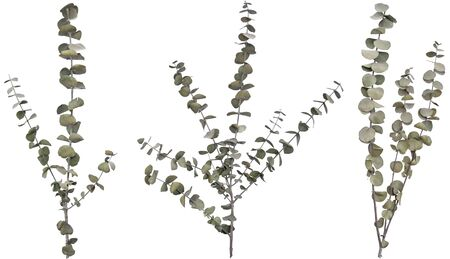 Three separated dried ornamental branches isolated over white. Very high-res. Clean edges, no shadows.