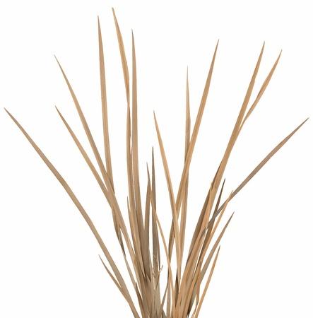 Gedroogd sier gras klomp geïsoleerd over wit. Zeer hoge-res. gladde snijranden, geen schaduwen.