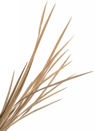 rietkraag: Gedroogd sier gras klomp geïsoleerd over wit. Zeer hoge-res. gladde snijranden, geen schaduwen.
