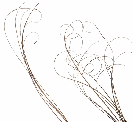 Two separated bundles of thin ornamental curly sticks isolated over white. Very high-res. Clean edges, no shadows. Reklamní fotografie
