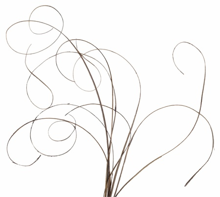 Bundle of thin ornamental curly sticks isolated over white. Very high-res. Clean edges, no shadows.