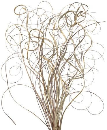 A bouquet of curly winding ornamental sticks. Very high res.