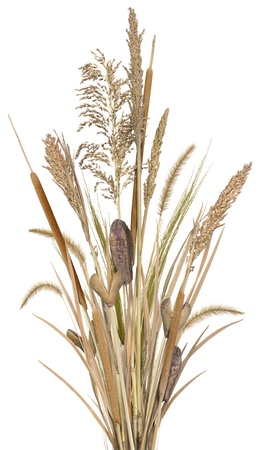 A bouquet of varied ornamental grasses and reeds, isolated on white. Very high res.