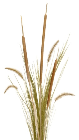 reeds: A bouquet of ornamental grass, cattails and fountain grass, isolated on white. Very high res.  Stock Photo