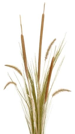 rietkraag: Een boeket van decoratieve gras, cattails en fontein gras, geïsoleerd op wit. Zeer hoge res.