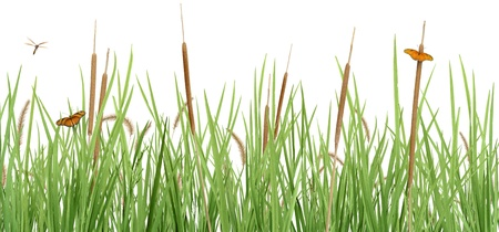 A pleasant grass scene with cattails, butterflies, and a dragonfly, isolated on white.  photo