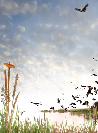 reeds: Wilderness elements composited on a light cloud background. Includes butterflies, a dragonfly, and flock of canadian geese