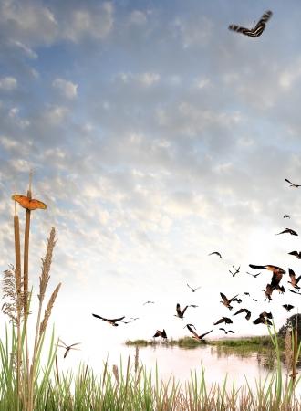 Wildernis elementen op een achtergrond licht cloud luminantie. Vlinders en, een dragonfly kudde van Canadese ganzen