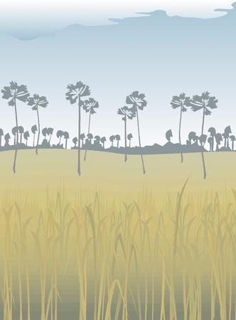 arrozal: colina paisaje de arroz maleza