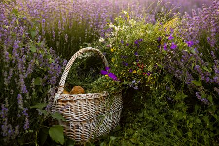 Basket with bred and flowers in lavender field, sunset time. Concept of relax, harvest.