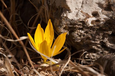 yellow flower 스톡 콘텐츠