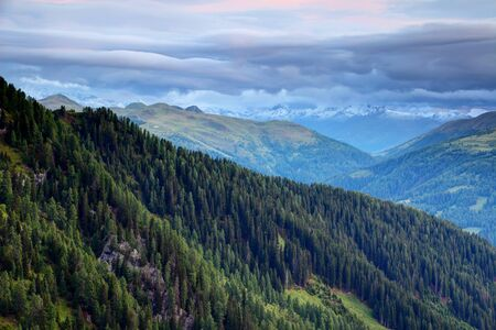Dark green pine forests on Carnic and Gailtal Alps slopes in Obertilliach Lesachtal valley in morning with snowy peaks of Villgraten Defereggen Alps High Tauern in background Osttirol Austria Europe