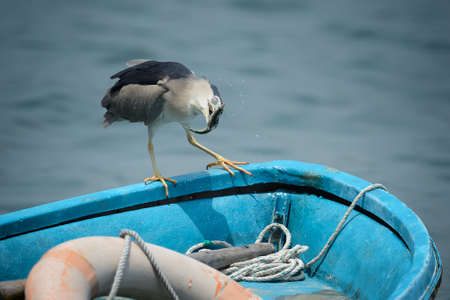 catch fish: catch fish