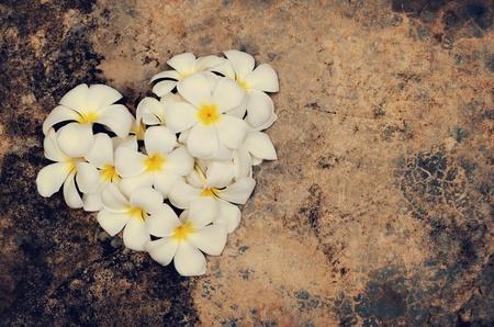 Group of white plumeria flowers in shape of heart, on grunge floor  Stock Photo