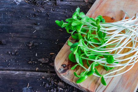 unfold: Sunflower seedings placed on a weeden cutting boardS