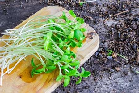 Sunflower seedings placed on a weeden cutting boardS photo