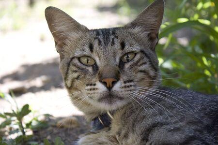 whiskar: cat