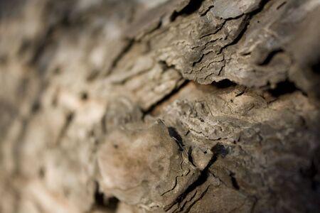 roseleaf: brown bark