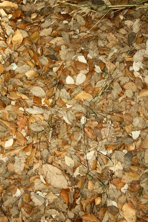 leafs Stock Photo